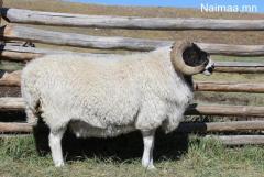хонь зарна